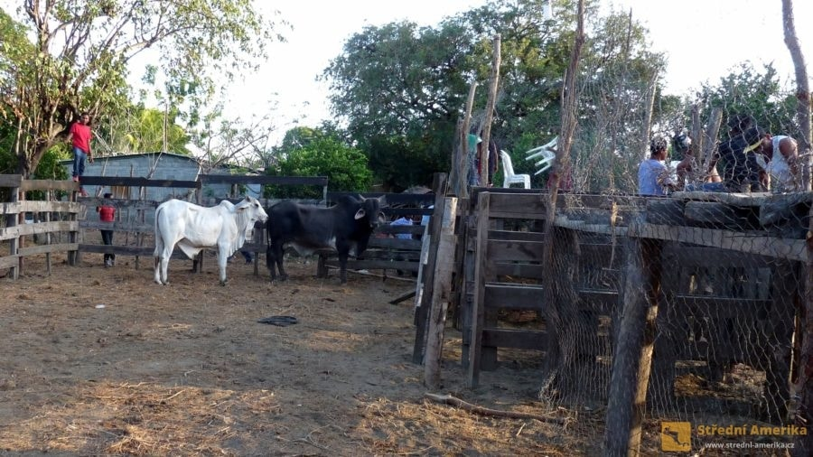 Ometepe: Corrida de Toros na Ometepe, depo s býky