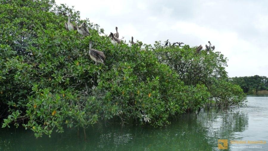 Národní park Rio Dulce, ptačí kolonie.
